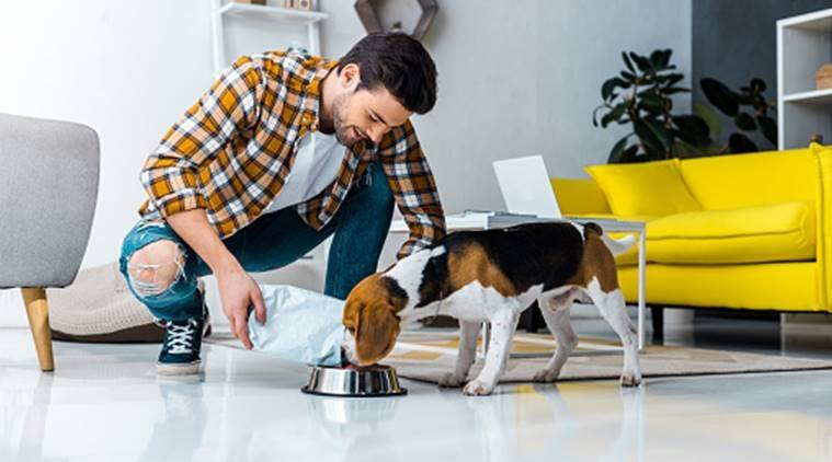Key Tips to Find Out The Best Pet Sitters