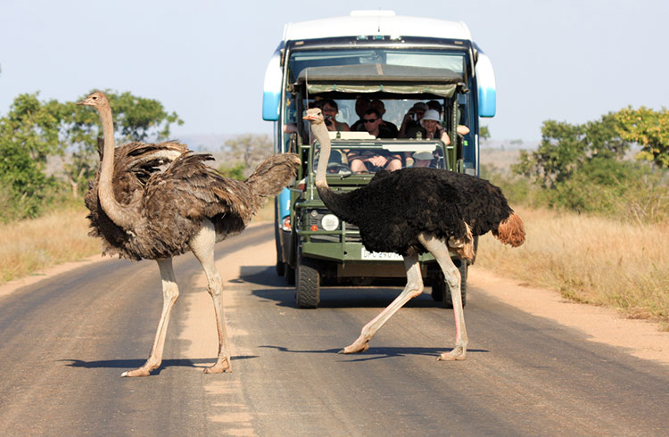 About African Adventure Safaris For Ladies