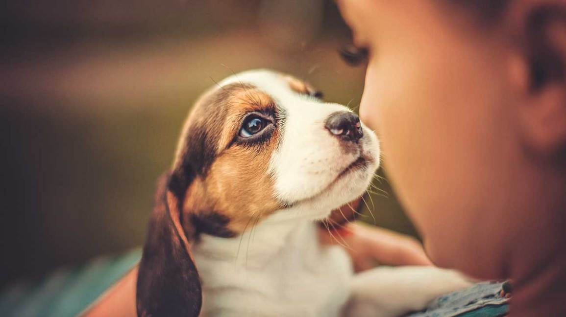 Only the Best Pet Items & Services for the Ultimate Man's Best Friend